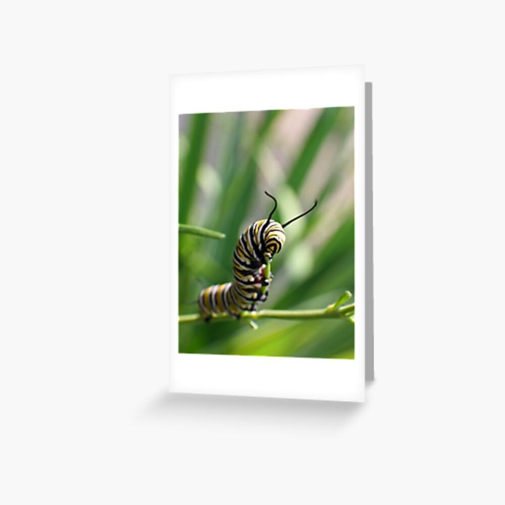 Monarch Caterpillar - 14 Greeting Card