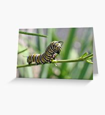 Monarch Caterpillar - 18 Greeting Card