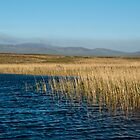 Islay: Reeds On the Loch by Kasia-D