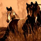 Horse Spirits by NaturePrints