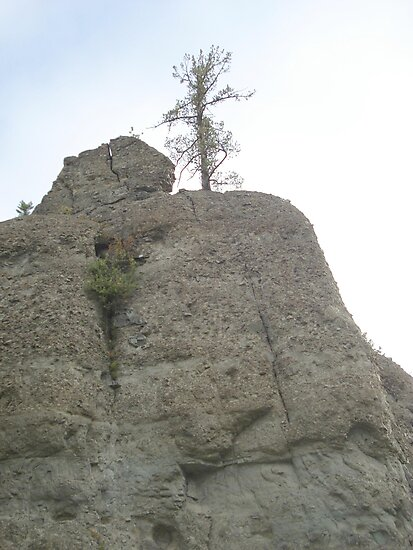 Tree on Sandstone Outcrop by May Lattanzio