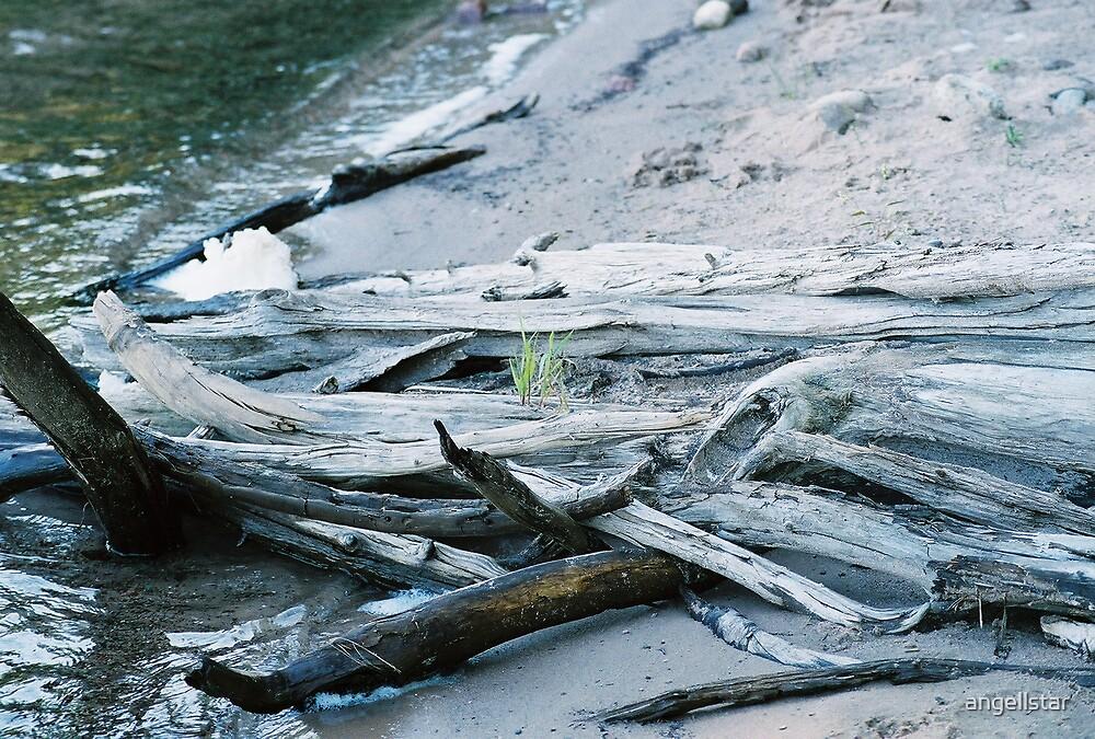 drift wood by angellstar