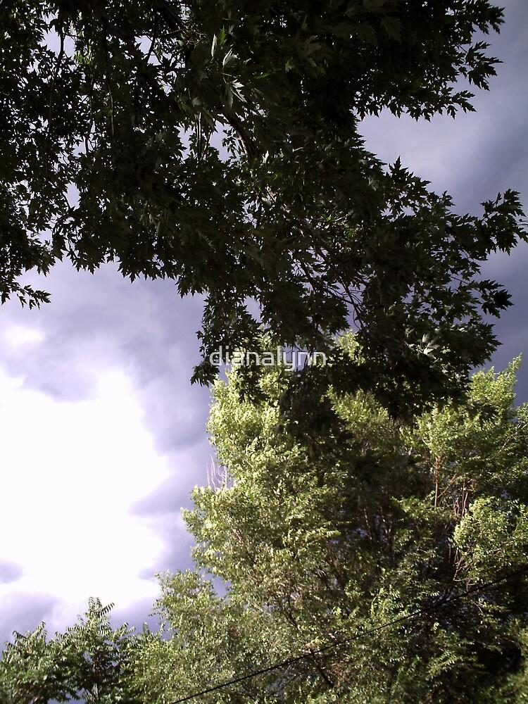 tree tops by dianalynn