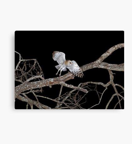 Barn Owl In Flight Canvas Print