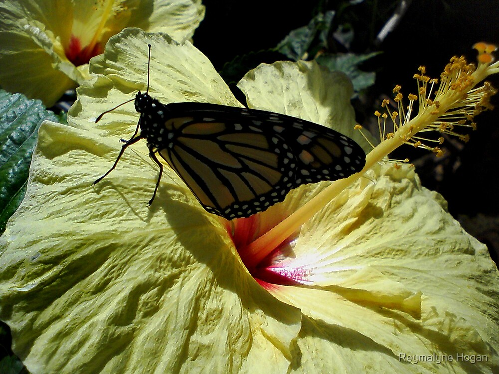 hibiscus and butterfly by Reymalyne Hogan