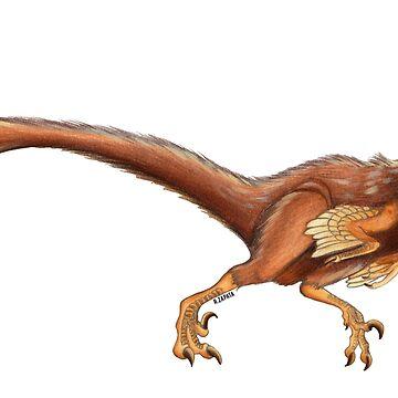 Elopteryx nopcsai de nyctherion