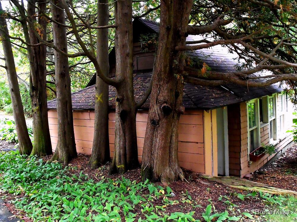 cottage by Bruce Miller