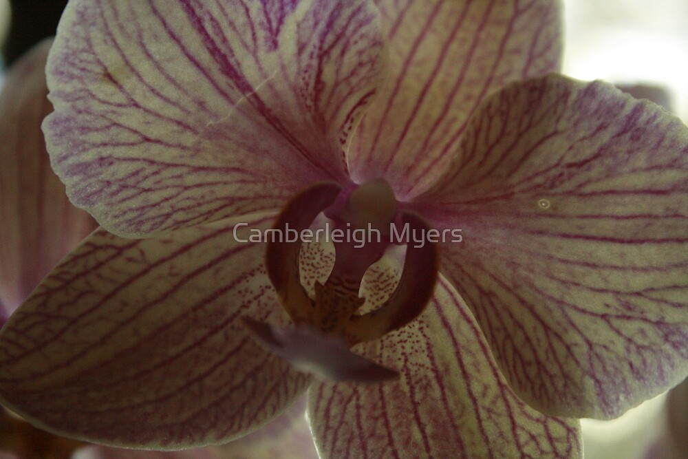 Flower by Camberleigh Myers
