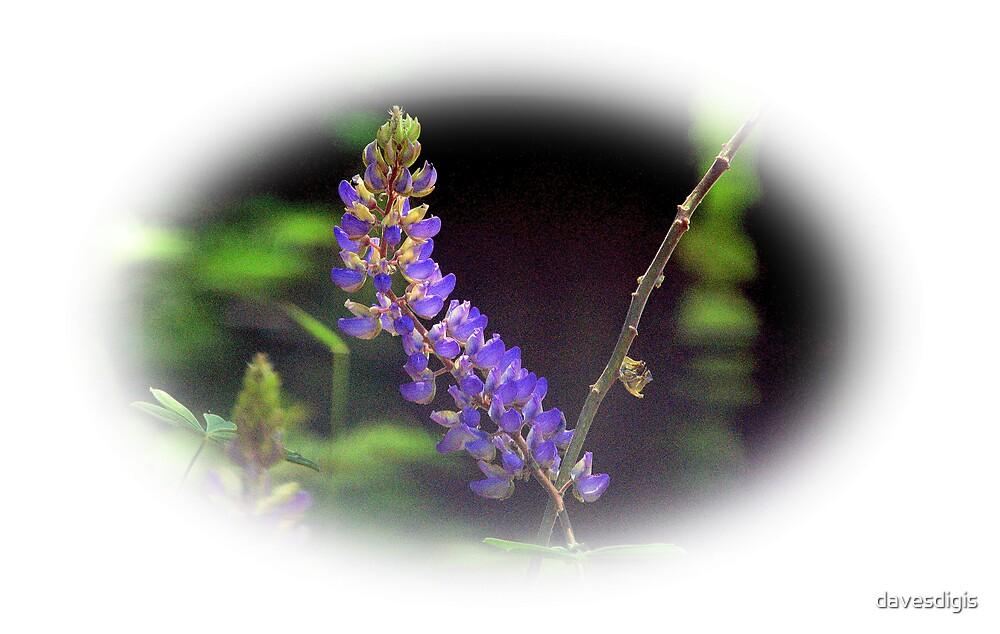 Yosemite Wild Lupin............... by davesdigis