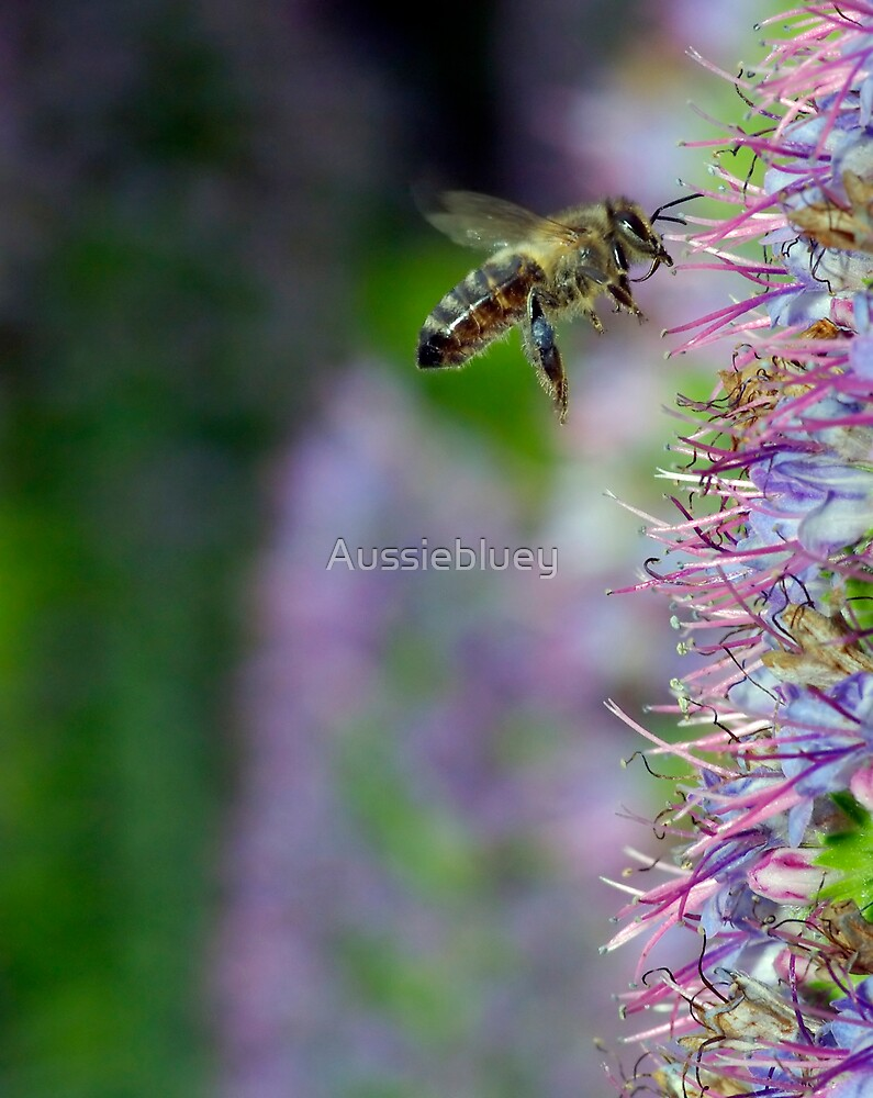 Collecting Nectar by Aussiebluey