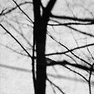 Tree Shadow by Gavin Kerslake