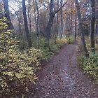 A Walk In The Woods by RVogler