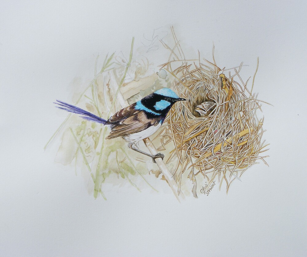 fairy wren at nest 2 by JodiStewart