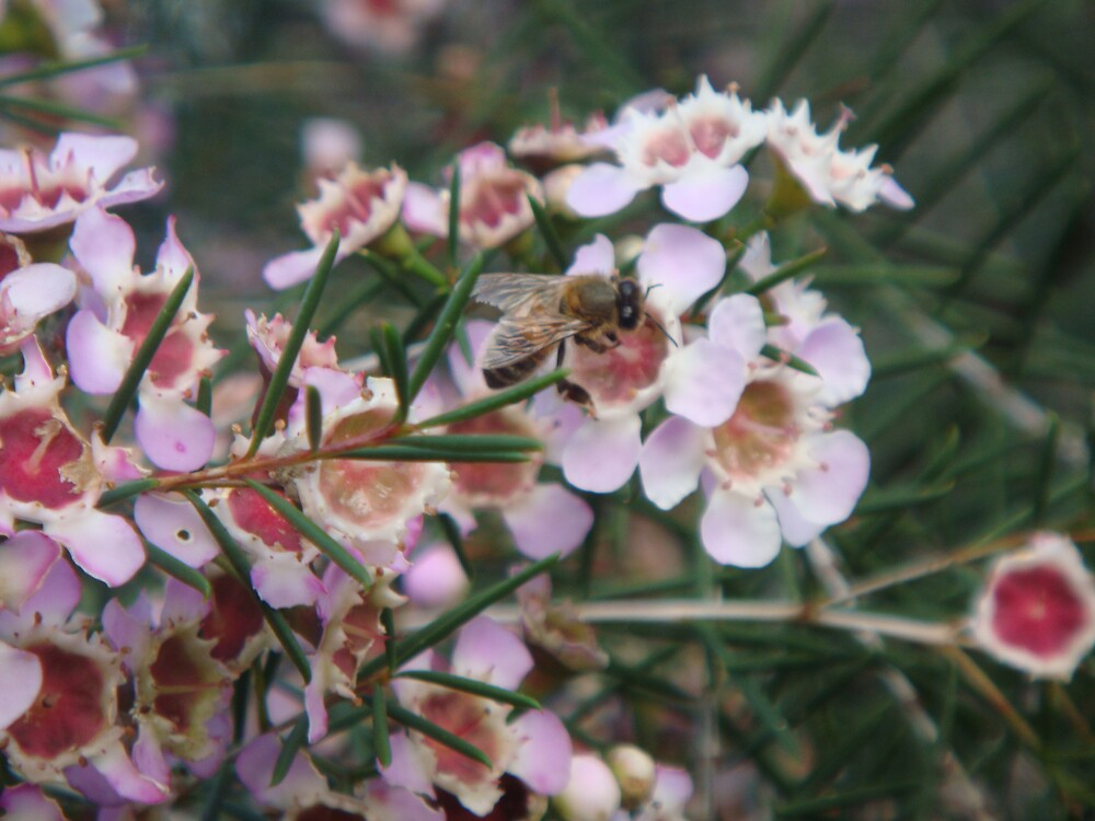 Busy bee by Cheryl J Newman
