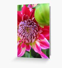 Dahlia - PINK Greeting Card