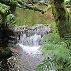 Venford Stream by lezvee