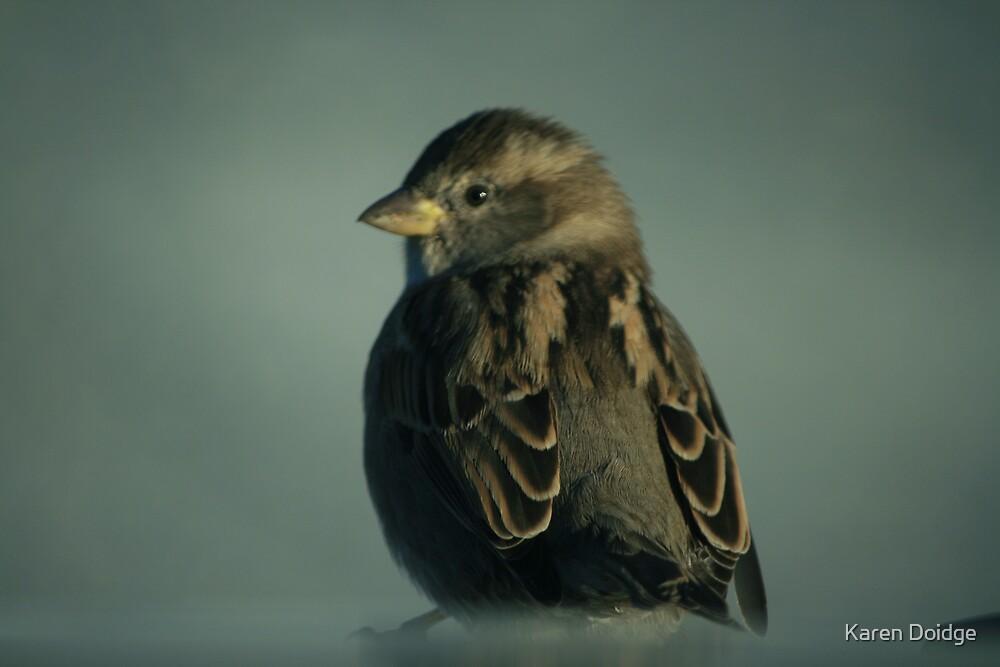 Hedge sparrow by Karen Doidge