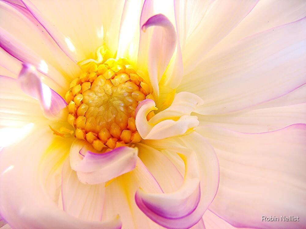 Dahlia by Robin Nellist