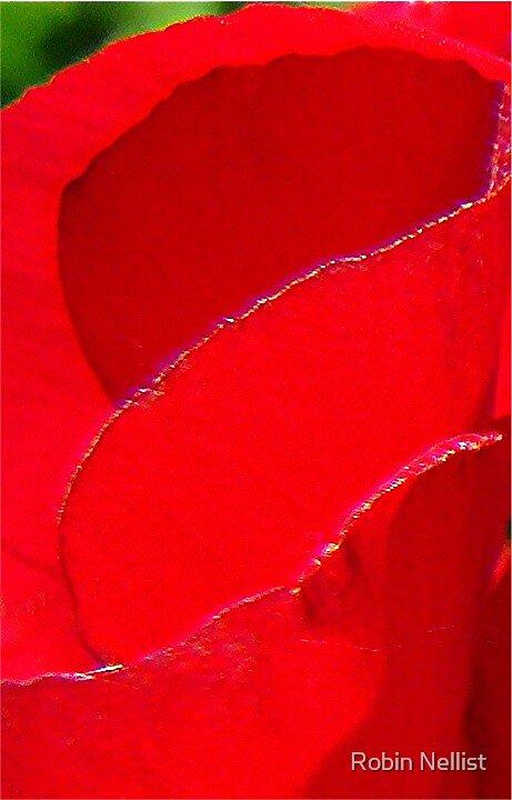 Geranium by Robin Nellist