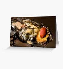 Eye of the fly Greeting Card