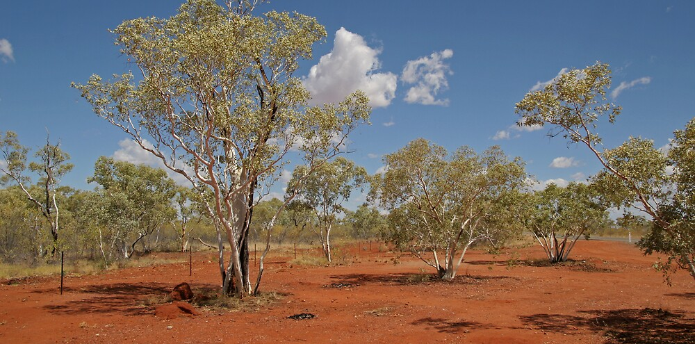 Primal Aussie Colours..Red dirt..brilliant blue sky..grey geen of the bush by Bilgolaj