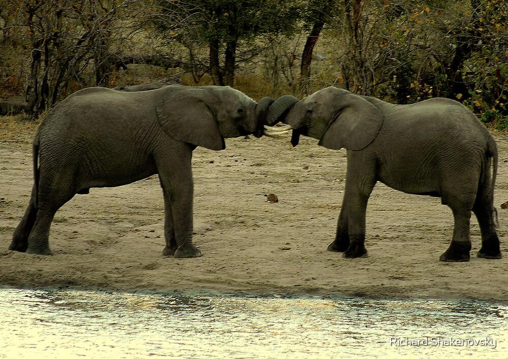 Loving Elephants by Richard Shakenovsky