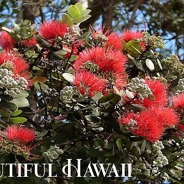AHT - Beautiful Hawaii (Special Request) by ApauHawaiiTours
