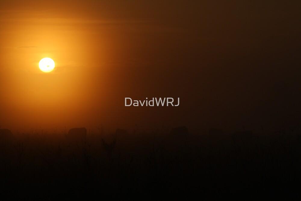 Amber Globe by DavidWRJ