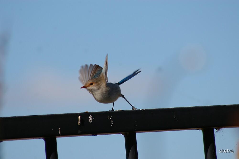 Flight by sketra