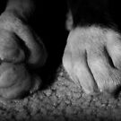 Baby Boxer Paws - Boxer Dogs Series by Evita