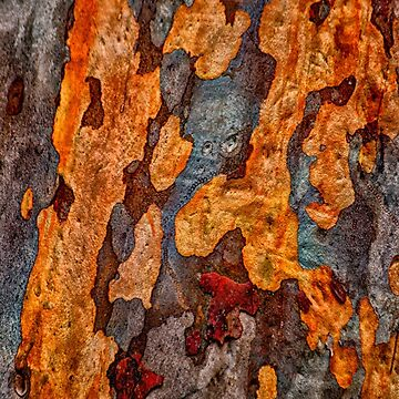 Nature's Fingerprint  - Mount Wilson and Mount Irvine NSW Bark Collection - The HDR Experience by Salieri1627