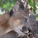 Puma by Carole-Anne