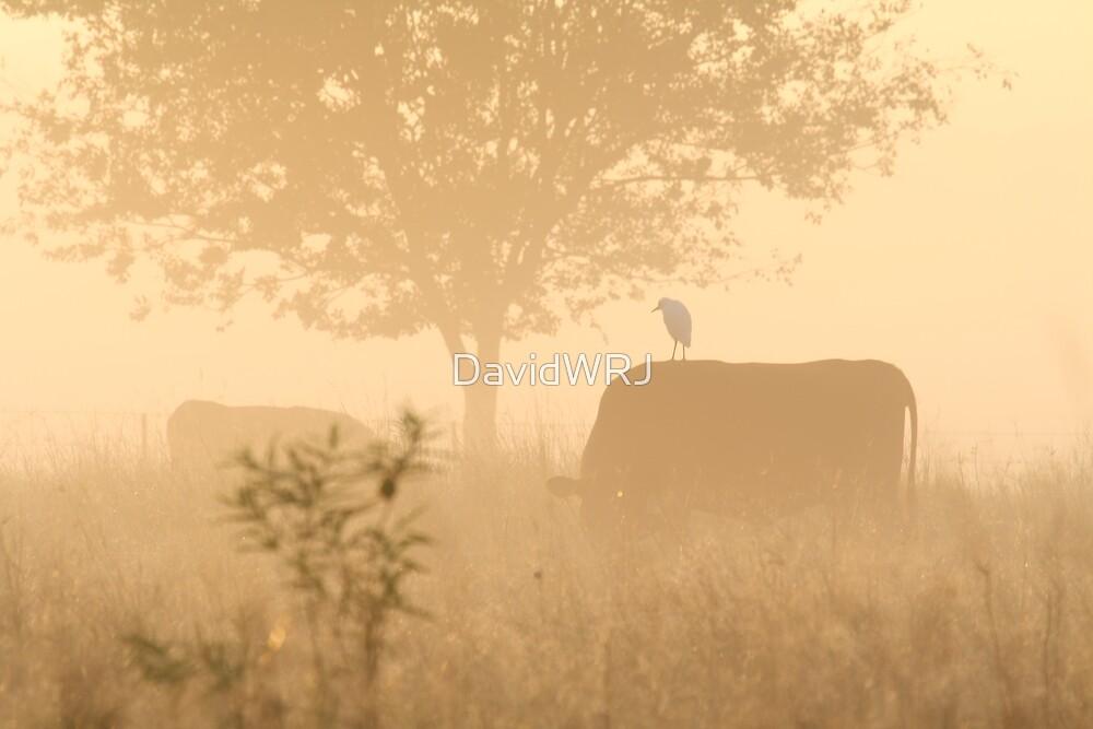 Morning Mist by DavidWRJ