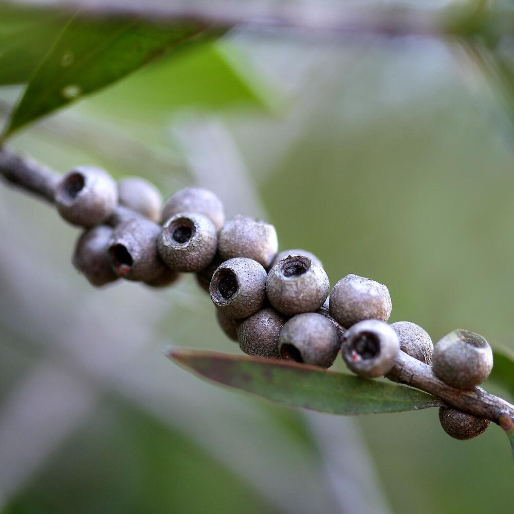 little bush pods by lorelle