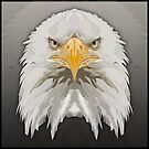 Topographic: Bald Eagle by NoelleMBrooks