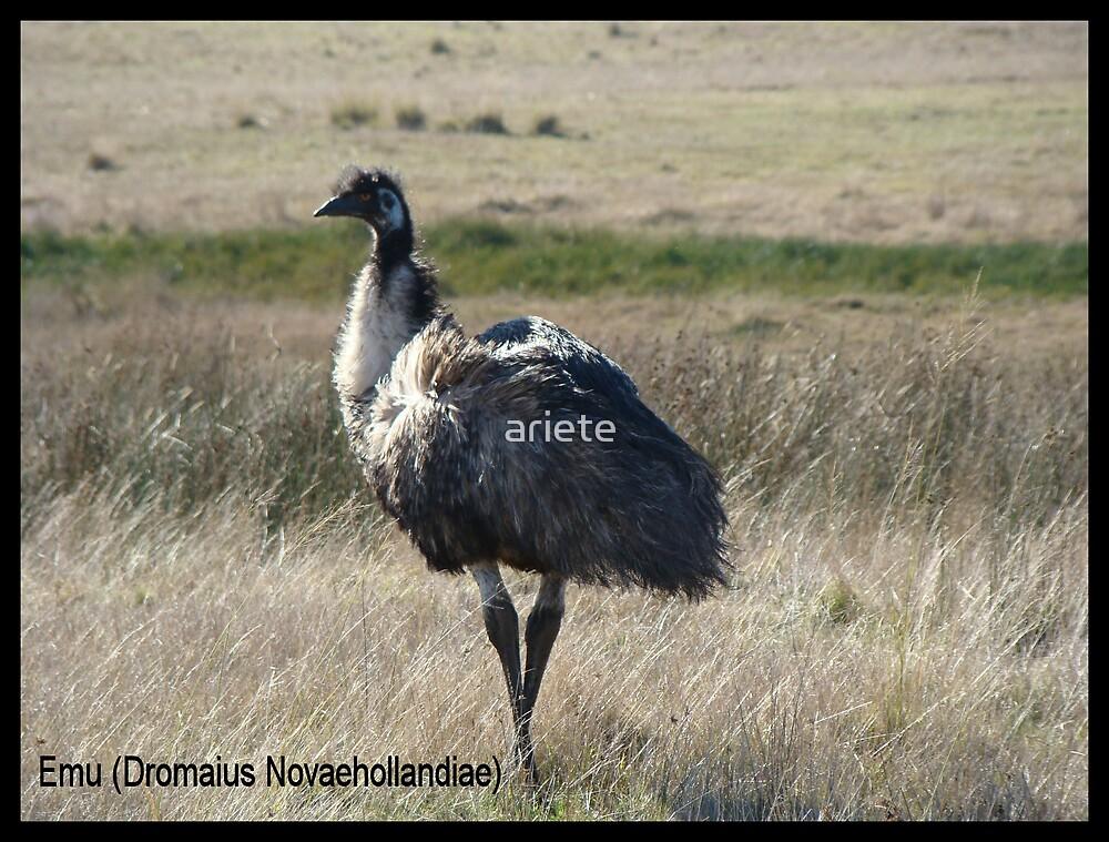 The Emu by ariete
