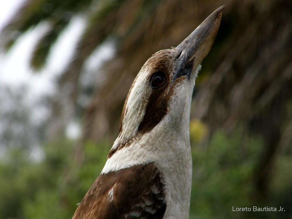 kookaburra by Loreto Bautista Jr.