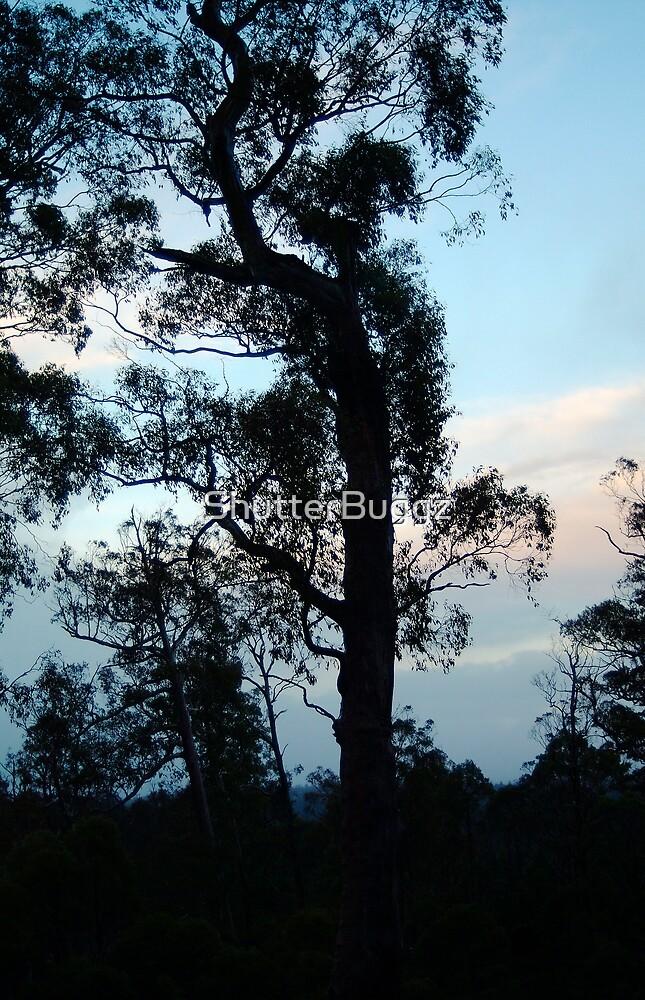 Dusk - Cradle Mountain (Tasmania) by ShutterBuggz