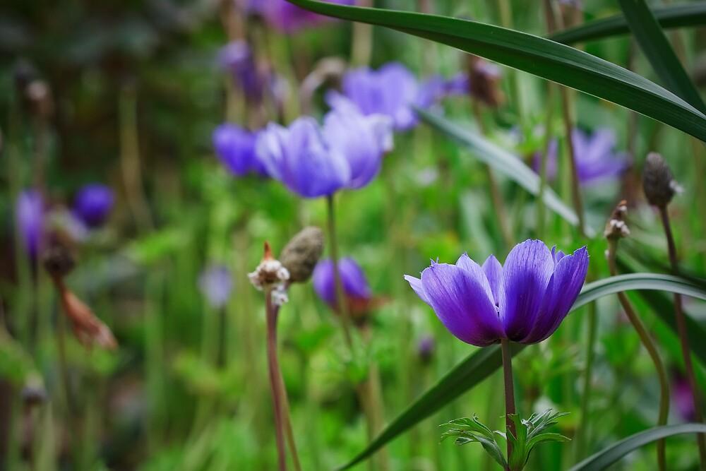 Purple Flowers by Andrew Widdowson