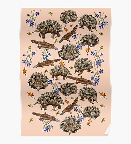 monotremes and wildflowers on apricot Poster