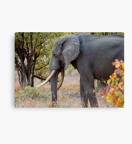 "TUSKERS OF ""THE KRUGER NATIONAL PARK"" Canvas Print"
