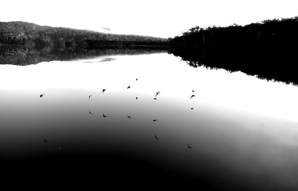 Swallows at dawn by Joshdbaker