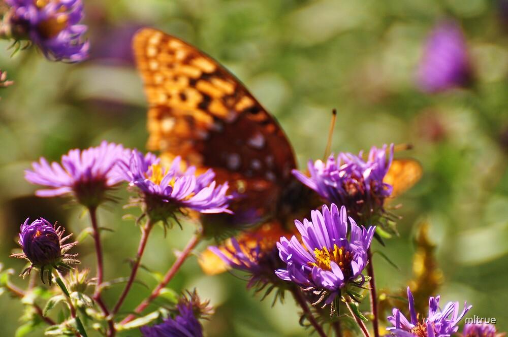 A Beautiful Blur (butterfly) by mltrue