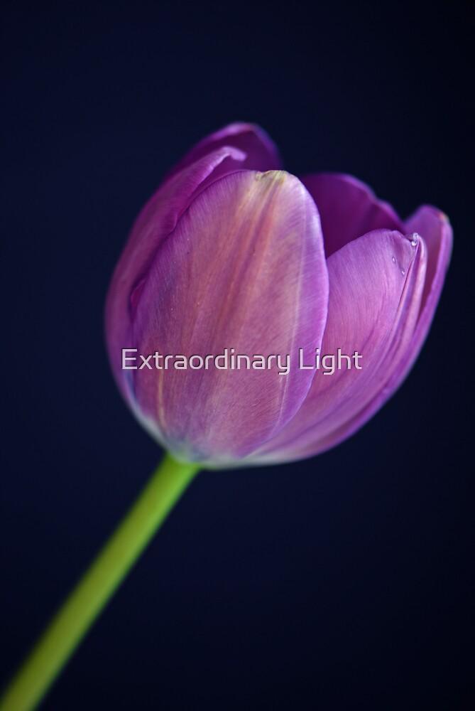 Single by Extraordinary Light