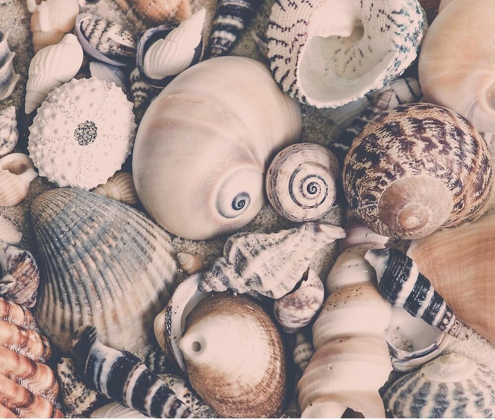 retro sea shells by artsandsoul