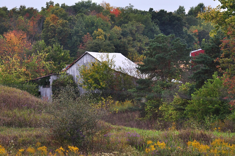Barns Amid Autumn Trees by mltrue