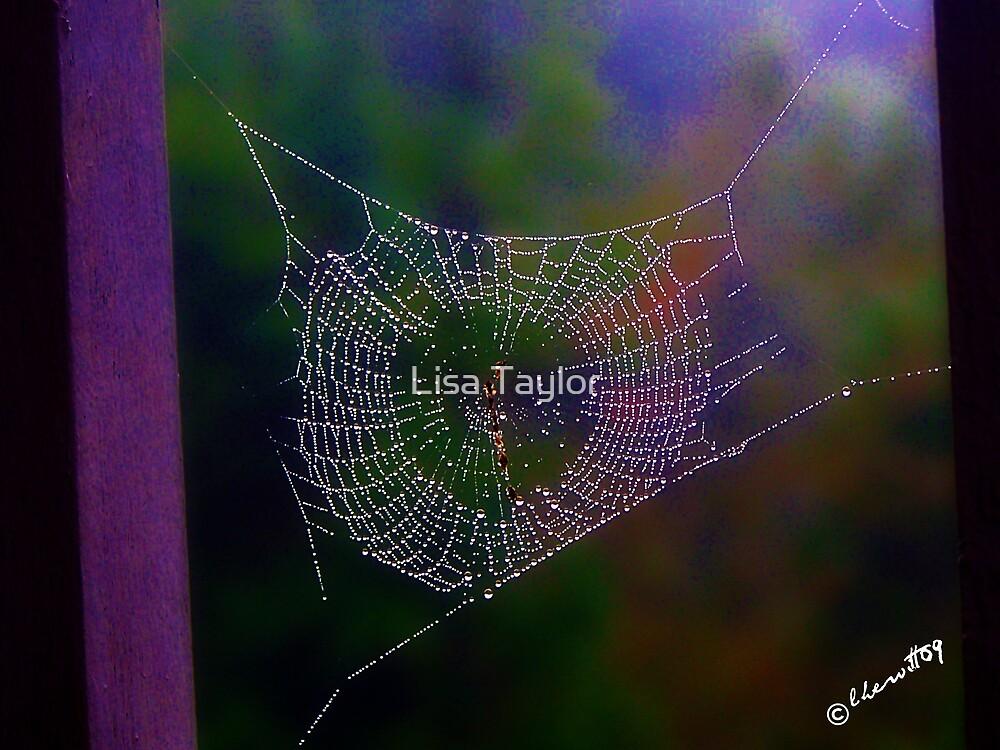 Fall Web by Lisa Taylor