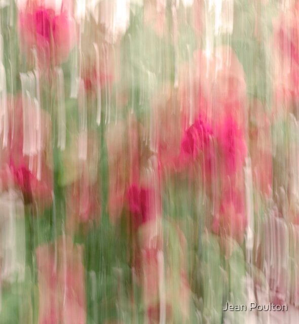 dripping roses by Jean Poulton
