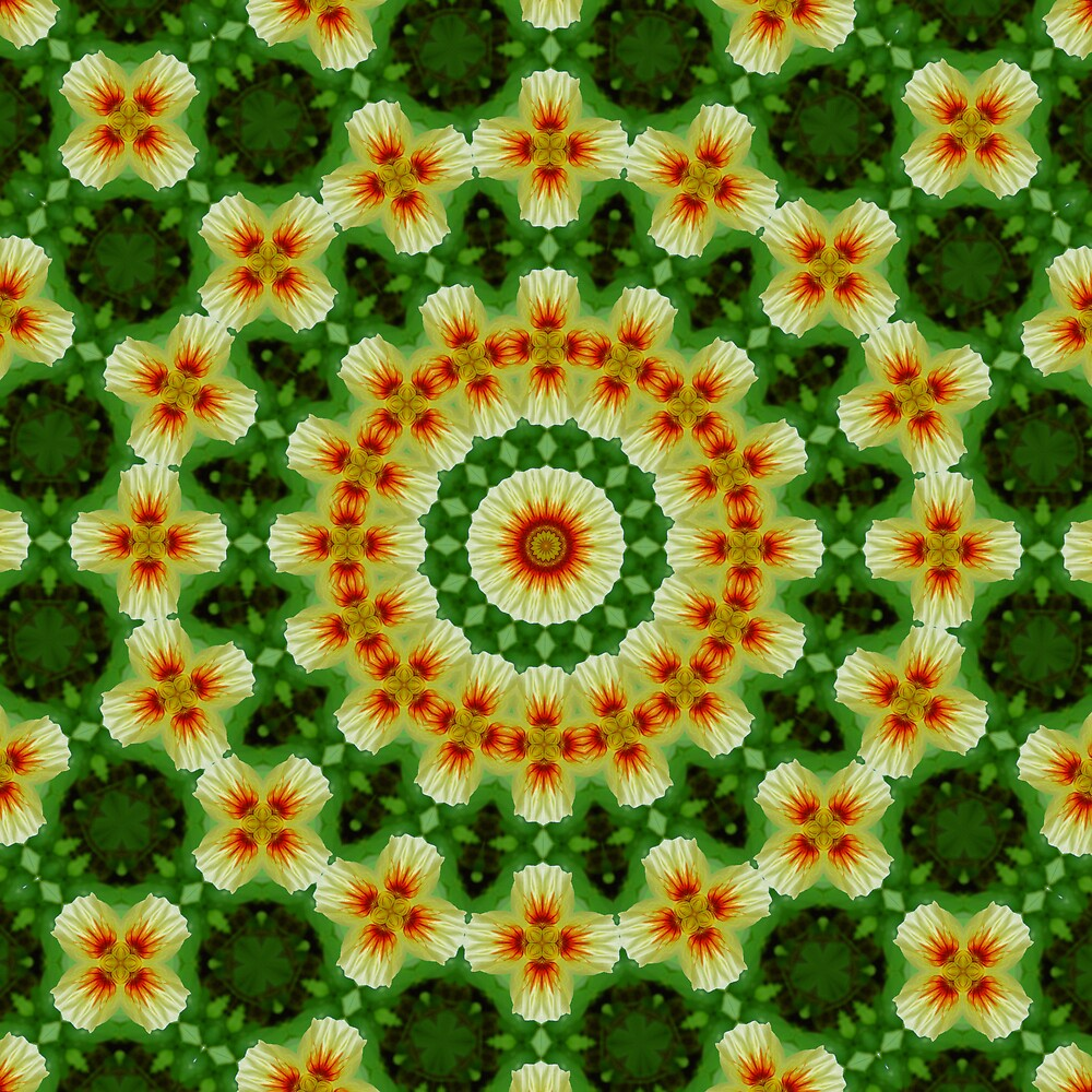 Floral Kaleidoscope by shadyuk
