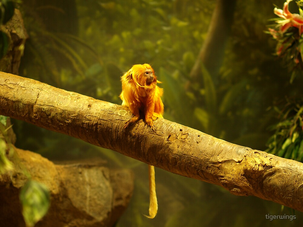 Golden- Lion Tamarin at Play by tigerwings